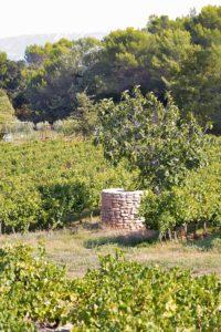 peit puit en provence au milieu des vignes